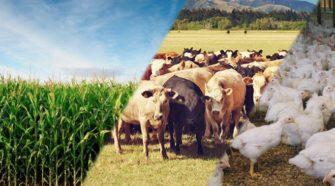 Exportações agropecuárias