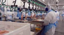 Entra em vigor amanhã (16) a proibição de importação de carne de frango de 20 frigoríficos brasileiros – 12 deles pertencentes à BRF – pelos países que compõem a União Europeia.