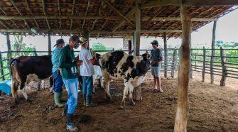 Sergipe é o sexto estado em produtividade de leite no Brasil