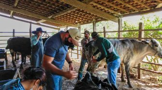 Uso de tecnologia aumenta a produtividade de leite em Sergipe