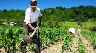 Limite de classificação de produtores rurais é elevado
