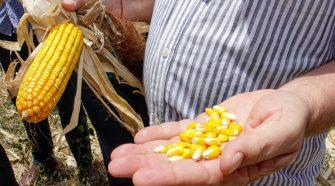 ICMS para produção de milho continuará reduzido em Sergipe